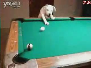 [视频]天才狗狗打桌球不用杆_红网视听_红网