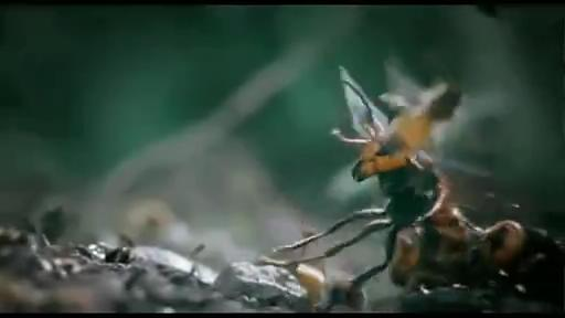 [蜜蜂]震撼!30只欧洲大黄蜂屠杀3教程日本视频英语万只全集视频初学图片