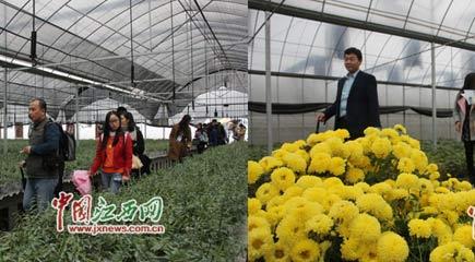 网媒记者探访井冈山农业科技园八角楼园区