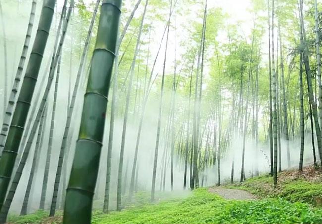 [蓝色洞庭]益阳篇(上):竹海寻仙踪 水乡净心灵