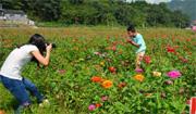 Yongding Area in Zhangjiajie City: enchanting flowers