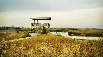 全国网媒记者走进张掖国家湿地公园