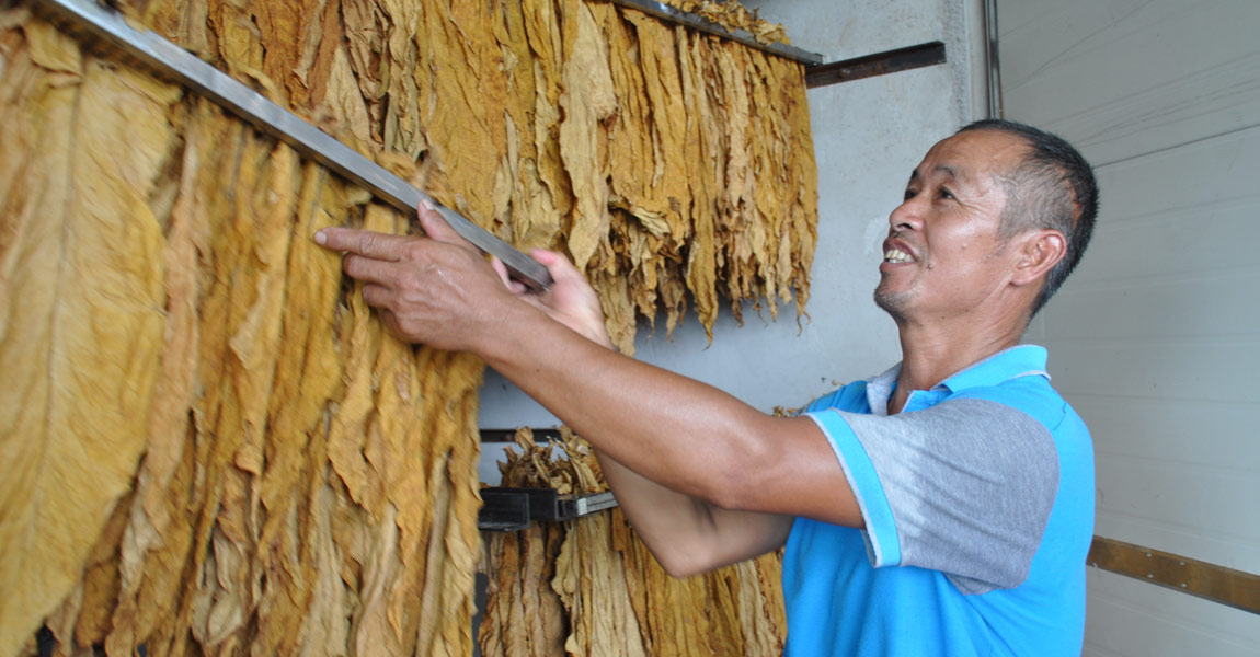 蒋兴田是全村有名的烤烟和种粮大户,种植烤烟80亩,在工作队帮扶下,如今烤烟也有了收入,直接带动了村里20多名村民务工。
