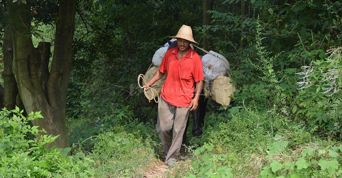 路通了,赶马的范理红打算改行,加入合作社种玉竹等耐旱经济作物。
