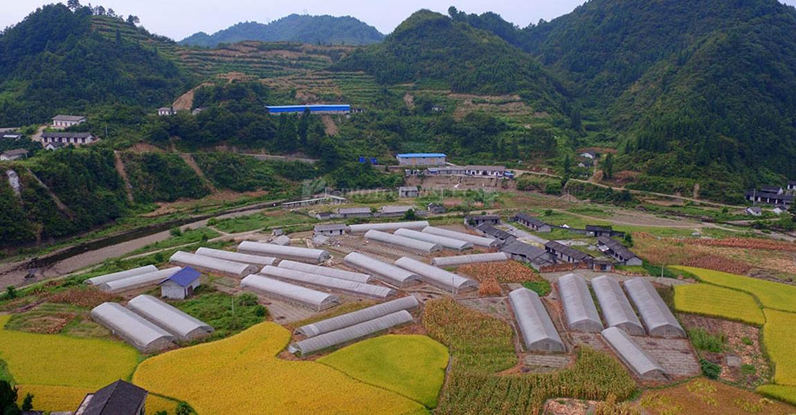 三家田村大棚蔬菜航拍图。