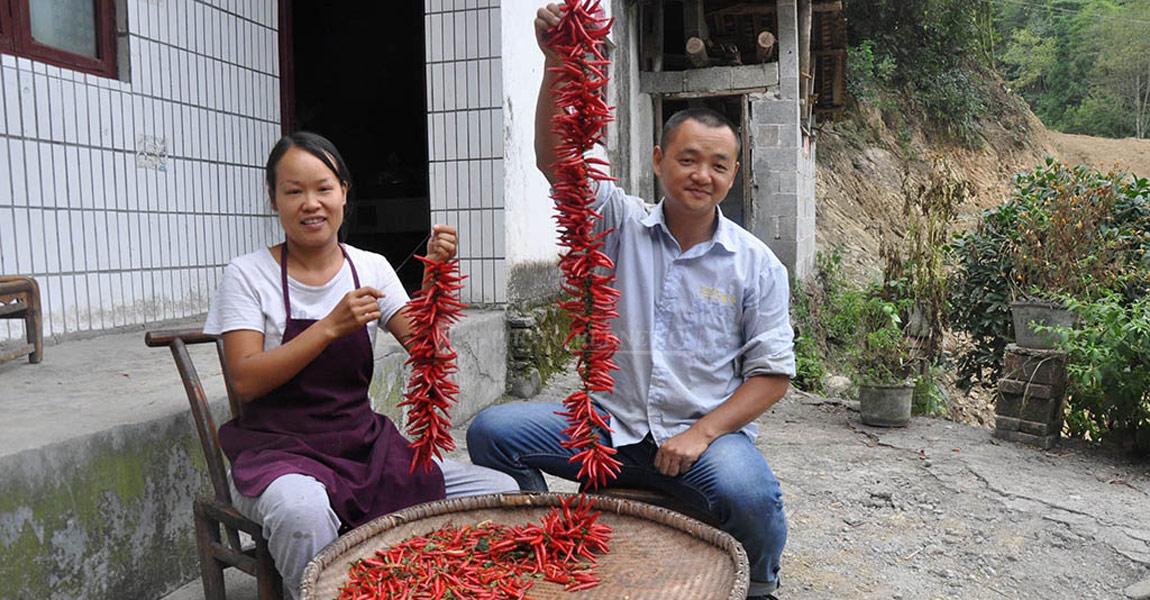 村民孙江山夫妇享受辣椒丰收的喜悦。