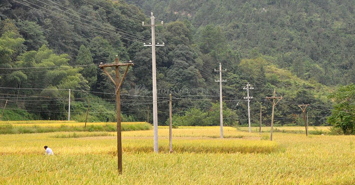 扶贫队进驻以来,协调帮助三家田村进电网改造,高大结实的水泥电线杆与过去的木头电线杆形成了鲜明对比。