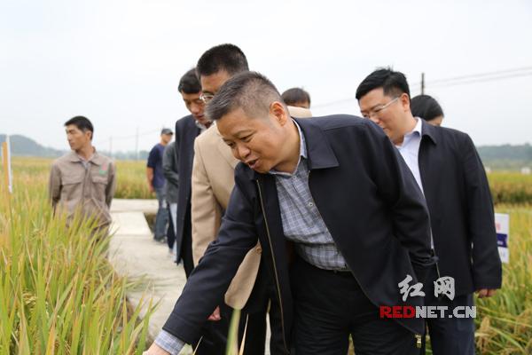 走村入户 湖南省粮食局宣传爱粮节粮知识促粮食减损增效