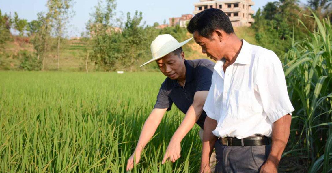 扶贫队长朱元安正在稻田里和村民交流。