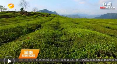 [视频]湖南启动第三次全国农业普查