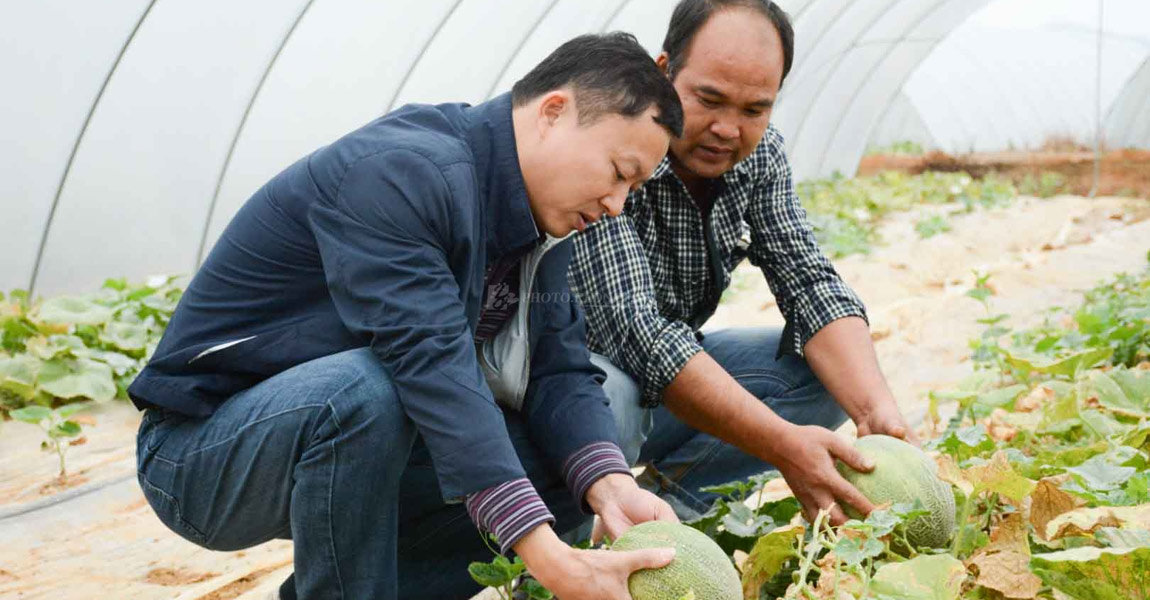 扶贫队长肖冰正在大棚地里和农户交流种瓜经验。