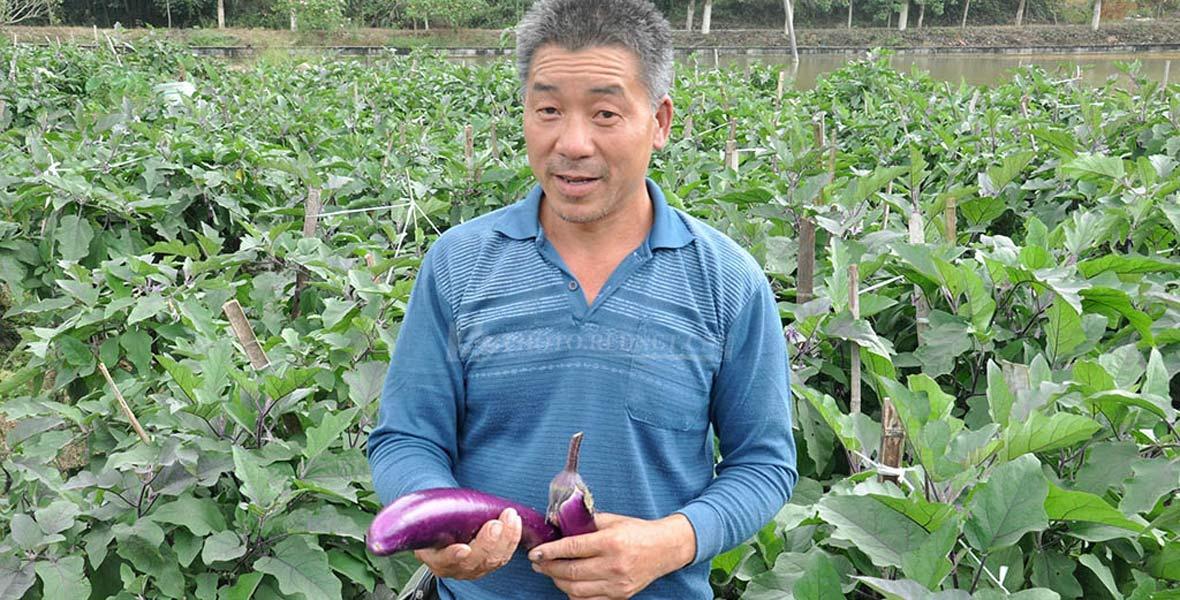 插柳村设立订单式农产品直供基地,目前已扩建到600多亩,首期现已种植高山萝卜200亩,带动贫困户务工。
