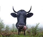 不可思议的动物肖像