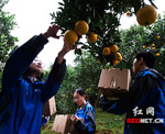 """湖南省煤炭管理局助力精准扶贫""""开花结果"""""""