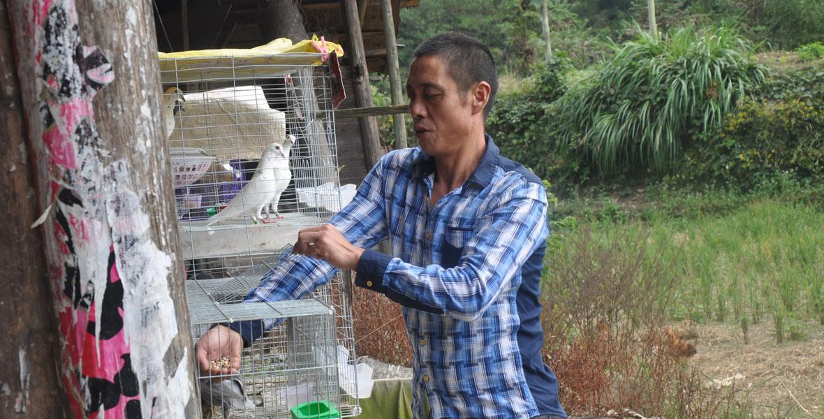 饲养扶贫队赠送的信鸽,吴昆林对未来的生活充满了希望。
