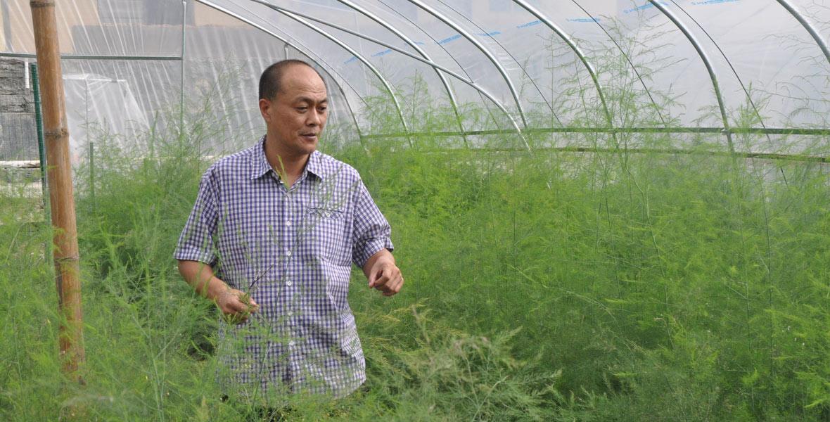 湖南省林业厅驻双牌县麻江镇廖家村帮扶工作队队长袁巍查看村里芦笋种植基地的生长情况。