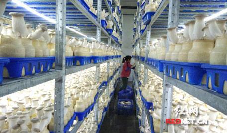 湖南积极创建出口食品农产品示范区 出口大幅增加