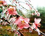 雨凇美景神奇冰花