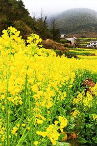 春分时节崀山脚下花花世界