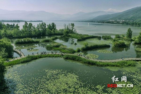 凉山州西昌邛海湿地风景.蒋金 摄