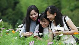 """富了乡亲!湖南绿色林业绘出生态产业""""惠民图"""""""