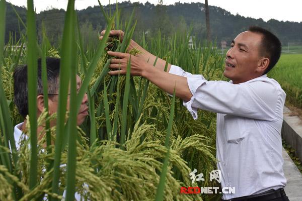 王化永 杂交稻实验田里 创 出来的党代表