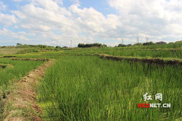芷江县:精准发力 贫困村引来致富活水