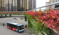 """长沙""""三年造绿大行动""""对城区46座人行天桥和立交桥实施绿化全覆盖"""