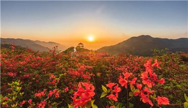 """胡中习:洞庭湖区农业现代化""""新泰和模式""""的绿色智慧"""