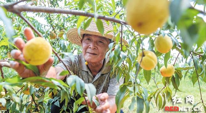 长沙:率先打赢脱贫攻坚战 让农业更强农民更富农村更美