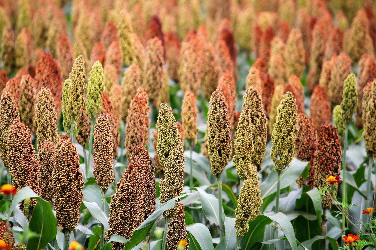 《农作物病虫害防治条例》公开征求意见