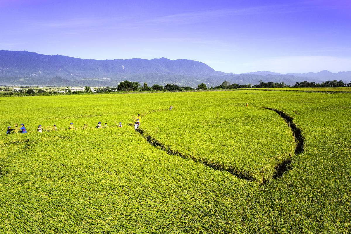 我国粮食生产坚定向优向绿步伐
