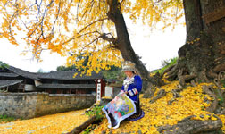 Picturesque yellow ginkgo and red maple leaves in Hunan