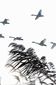 来长沙四大国家湿地公园观鸟