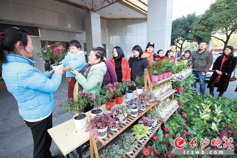 芙蓉社区为居民送来500盆花卉绿植装点阳台,期望更多小家变得缤纷多彩。长沙晚报记者 胡媛媛 摄