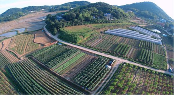 长沙青天寨生态农业有限公司金丝熊吃什么