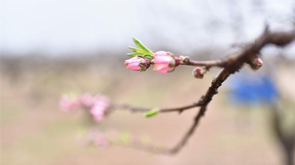 春暖花开(组图)