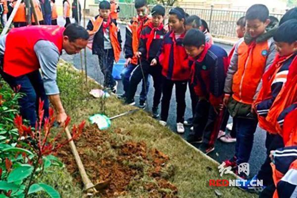 开头引领多方联动长沙小学生用v开头践行小学的绿色支部事难忘图片