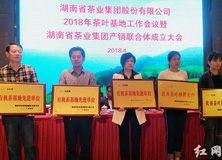 湖南省茶业集团产销联合体成立 2020年实现总销售额100亿