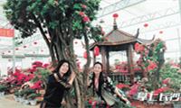 """宁乡丰收村里""""花为媒"""" 引资5亿元打造国内最大杜鹃花园"""