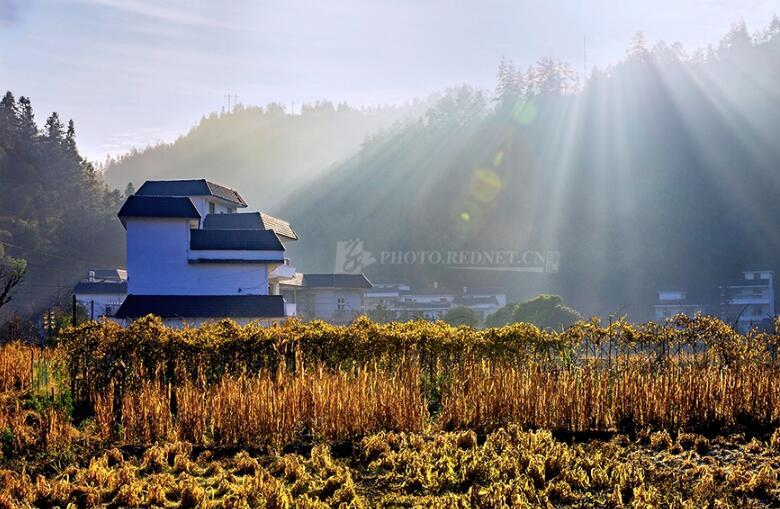 刘放生:从马克思农业农村思想中汲取乡村振兴的力量