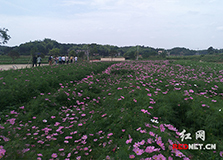 株洲:政协委员主题调研活动聚焦美丽乡村建设