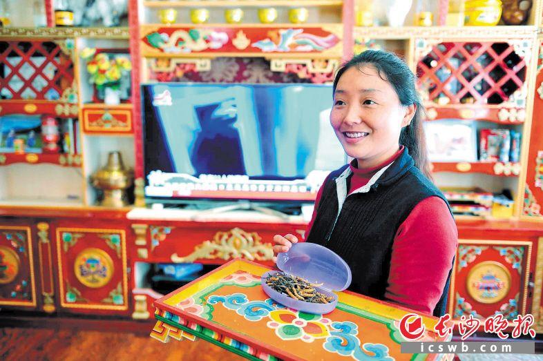 """近日,湖南援建的理县古尔沟镇丘地村,这座藏寨是整个阿坝州的""""最美乡村""""。藏族姑娘金秀,将几天前从雪山上挖回的冬虫夏草取出,准备卖给游客。"""