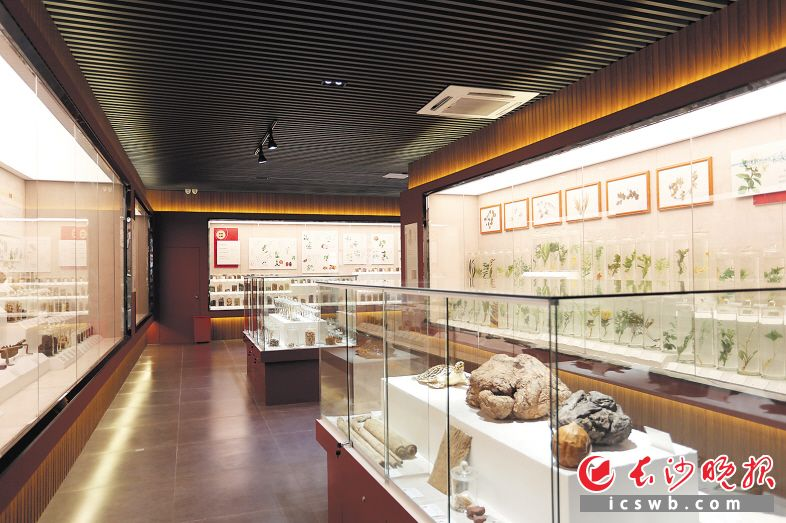 九芝堂中医药文化宣传教育基地中医药博物馆