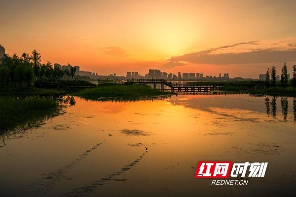 夕阳梅花风景图片