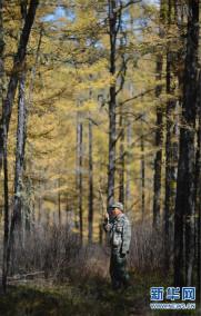 大兴安岭深处的驯鹿守护者