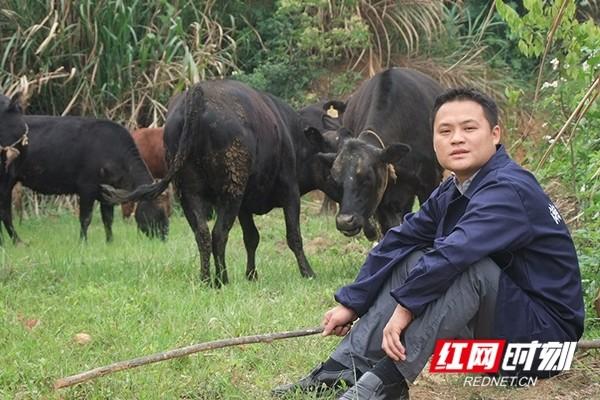 """曾芳:做强益阳的""""牛""""产业"""