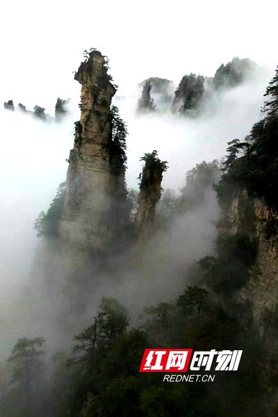 雨中的湖南张家界武陵源风景区天子山云雾飘渺.