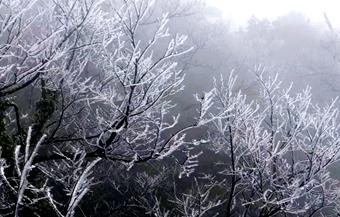 张家界天门山景区迎湖南首场雾凇