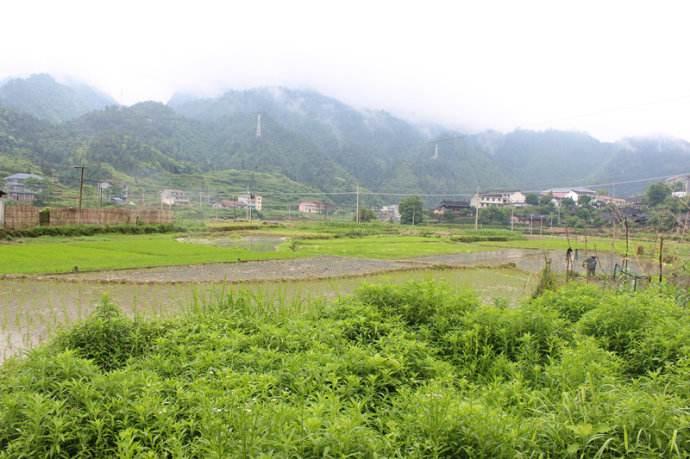 """潘信林:""""村级事务报告日制度""""何以成为乡村治理新路子?"""